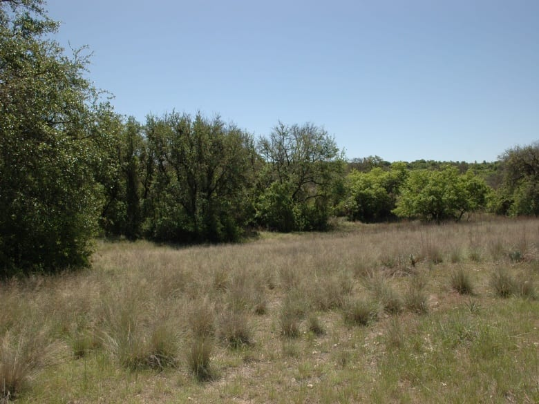 160 County Road 217, Goldthwaite, Texas 76844, ,Farm/Ranch,Sold,County Road 217,1010