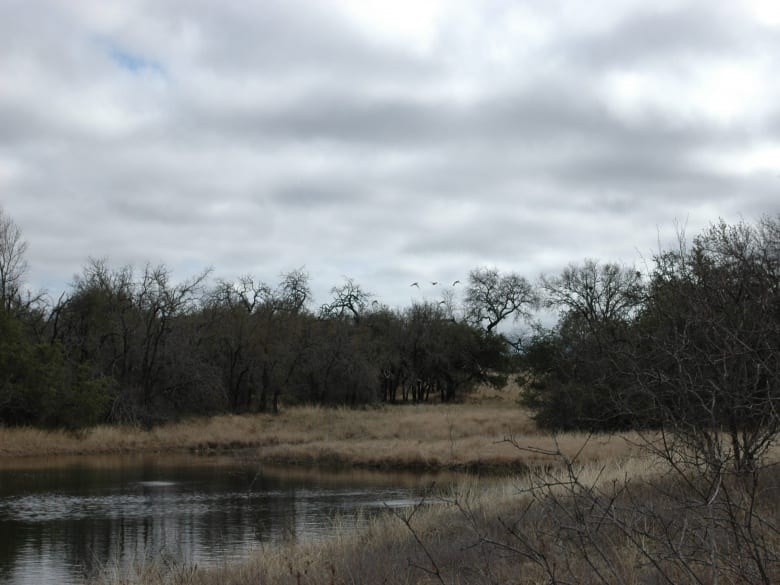 317 CR 272, Priddy, Texas 76870, ,Farm/Ranch,Sold,CR 272,1016
