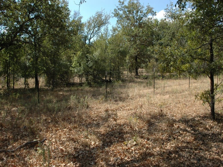 OWENS, Texas 76801, ,Farm/Ranch,For Sale,1024